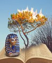 stock image of  Moses at burning bush free israel from egypt