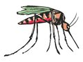 Mosquito hand drawn sketch cartoon illustration of Royalty Free Stock Photos