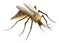 Mosquito illustration of the big Royalty Free Stock Photography