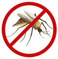 Mosquito illustration of a on a white background Stock Image