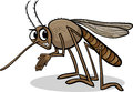 Mosquito insect cartoon illustration of funny character Stock Photos