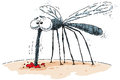 Mosquito suck a cartoon sucks blood from a bite Royalty Free Stock Image