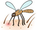 Mosquito sucking blood cartoon vector illustration of bite and from human skin Royalty Free Stock Images