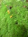 Moss Obrazy Stock