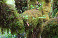 Moss around the trunk in the jungle lush Stock Photo