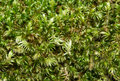 Moss Background Stock Photos