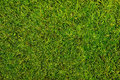 Moss background of close up Stock Photos