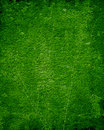 Moss background green with some soft shades on it Stock Images