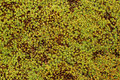 Moss background texture of green Royalty Free Stock Photography