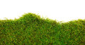 Moss background of on white background Royalty Free Stock Photo