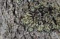Moss and Bark Rhapsody Royalty Free Stock Photo