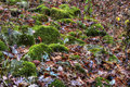 Moss on bolders in autumn and colorful leaves Stock Image
