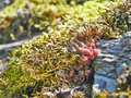Moss and cleft sprouts in summer forest close up Royalty Free Stock Photo