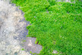 Moss close on cement floor Stock Images