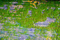 Moss close on cement floor Royalty Free Stock Photo