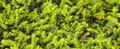 Moss close up of in nature Stock Photo