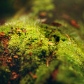 Moss Close Up View with Little Mushrooms Royalty Free Stock Photo