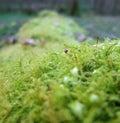 Moss closeup detail of a overgrown tree trunk Stock Photos