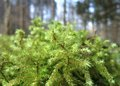 Moss closeup detail of a overgrown tree trunk in forest back Royalty Free Stock Photography