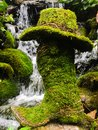 Moss covered cowboy boot and hat Royalty Free Stock Photo