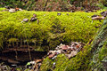 Moss covered fallen tree in mountains Stock Images