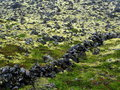 Moss covered lava field volcanic by and lichen in iceland Royalty Free Stock Photo