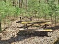 Moss Covered Picnic Tables In ...