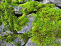 Moss covered rocks Royalty Free Stock Photo