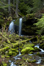 Moss covered rocks in stream. Stock Photography