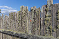 Moss covered stockade fence background backdrop Stock Photo