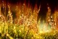 Moss Dark Macro