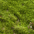 Moss detail Royalty Free Stock Photo