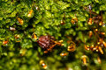 Moss drops macro Sphagnum water Royalty Free Stock Photo