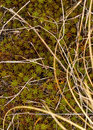 Moss and dry grass. Royalty Free Stock Photo