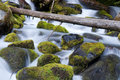 Moss Filled Boulders Fill Stream as Water Rushes By Royalty Free Stock Photo