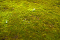 Moss floor on path in park relaxing for your eyes Royalty Free Stock Image