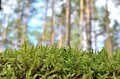 Moss in the forest Stock Photography