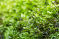 Moss Forest Stock Photography