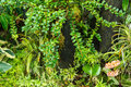 Moss forest Royaltyfria Foton