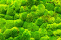Moss Forest Royalty Free Stock Photo