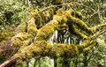 Moss forest on a tree trunk in deep rain Royalty Free Stock Images