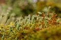 Moss fungus macro background slime colorful abstract natural of green and seeds fungi and molds closeup on the blurry Stock Photos