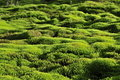 Moss green background. Stock Photography