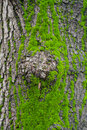Moss green on bark detail closeup macro Royalty Free Stock Photography
