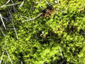 Moss green cover of Royalty Free Stock Photography