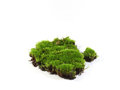 Moss green on white background Royalty Free Stock Photos