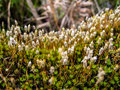 Moss green in the woods Royalty Free Stock Images