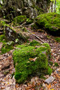 Moss-grown boulders in caucasus mountains Royalty Free Stock Photo