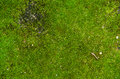 Moss grown on cement Royalty Free Stock Photo