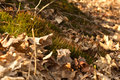 Moss in lath autumn leaves and spring plants Stock Photos